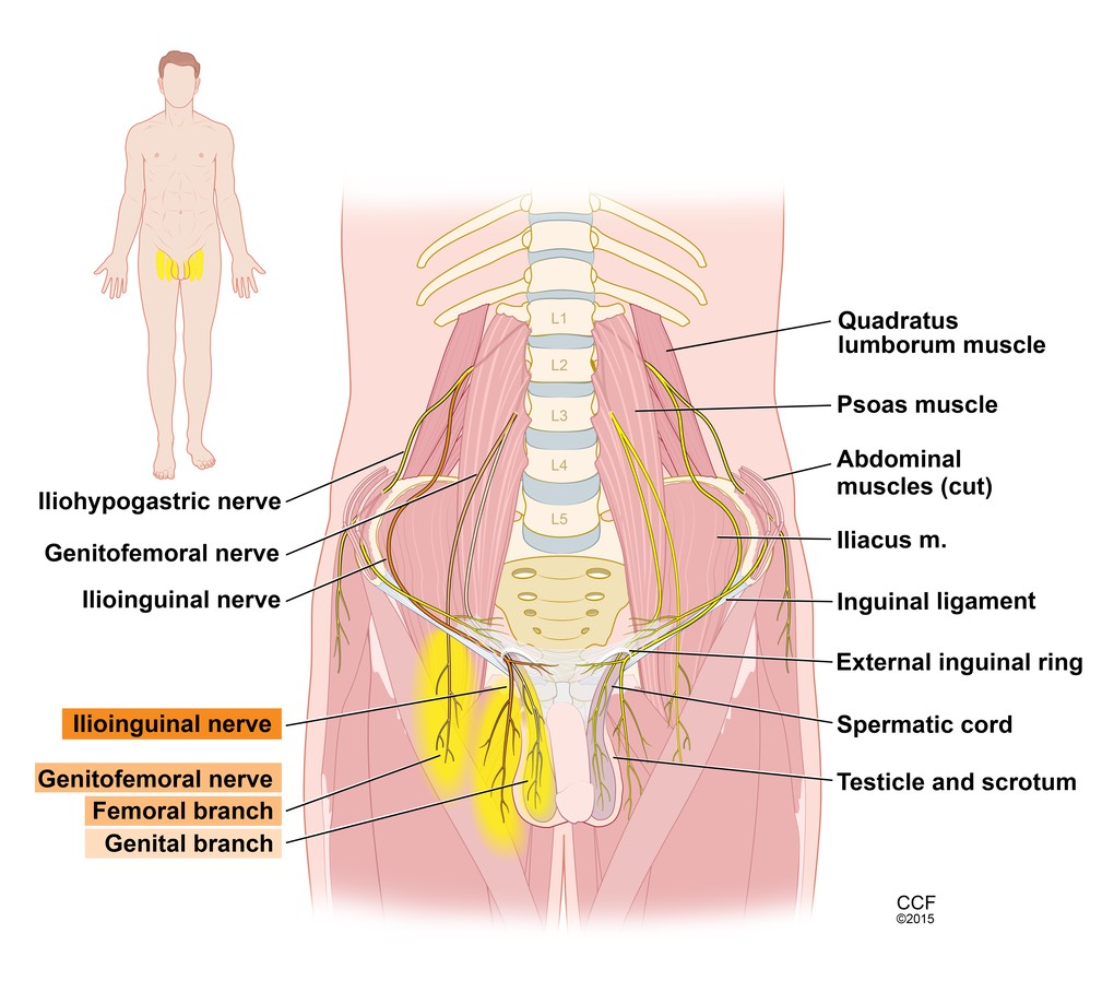 Nerve Blocks Spine Diagram Electrical Work Wiring Diagram